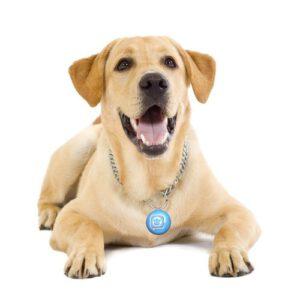 Pet Identification & Control