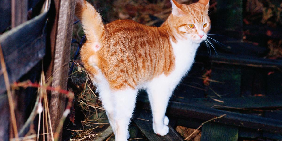 a feline cat spraying